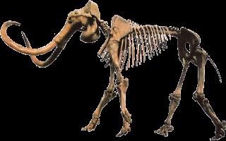 매머드는 1만2900년 전 찾아온 지구상 마지막 빙하기 당시 수가 급감했다. 빙하기가 찾아온 이유는 아직 의견이 분분하다. - MCDinosaurhunter 제공
